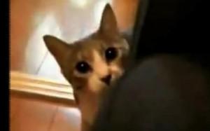 פרסום חתולים