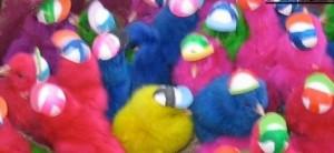 אפרוחים צבעוניים קטן