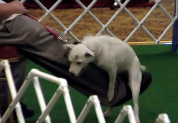 כלב מפמפם רגל