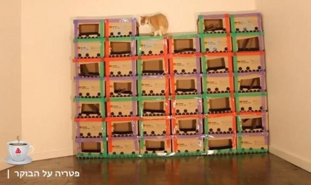 מבצר הקרטונים של רופוס החתול