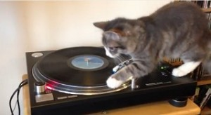 חתול תקליטן קאבר