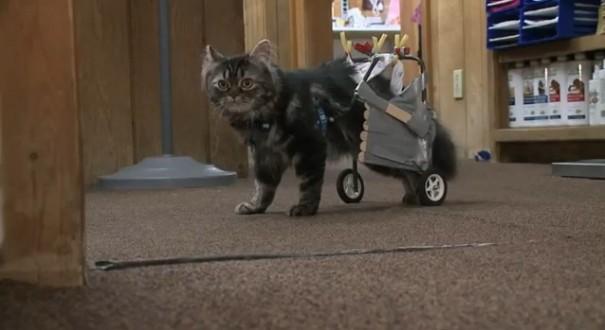 חתולה רובוטית