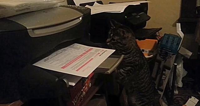 חתול מתקיף מדפסת