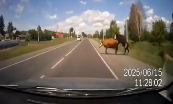 פרות משתגלות צר