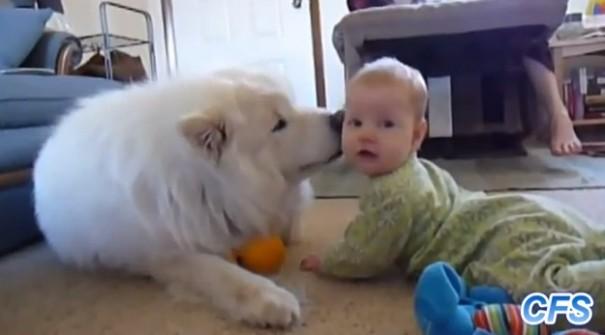 כלבים אוהבים תינוקות