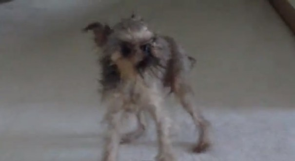 כלב רטוב