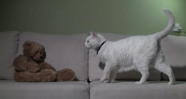 חתול ודוב