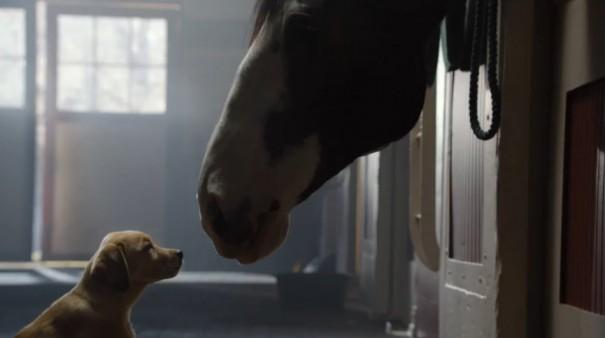 כלב וסוס 1