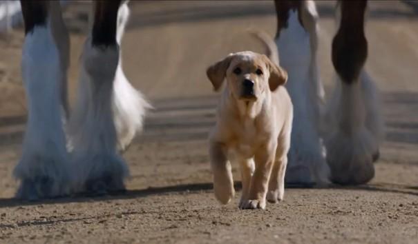 כלב וסוס 2