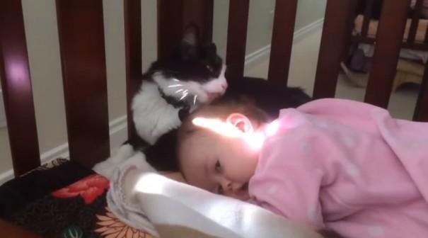 תינוק וחתול