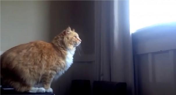 חתול כושל