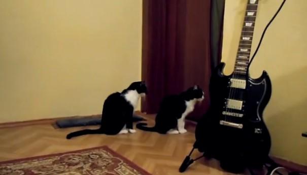 חתול מתנצל