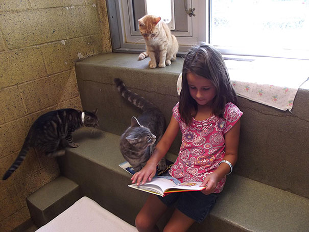 reading-children-shelter-cats-book-buddies-13