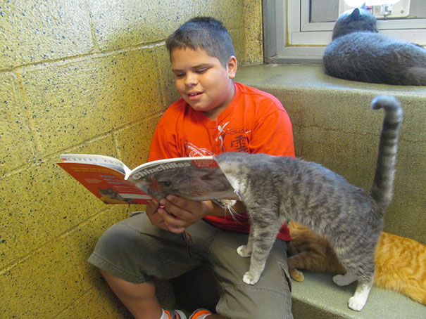 reading-children-shelter-cats-book-buddies-15