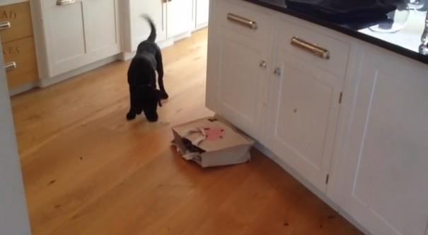 חתול בשקית