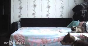 כלב מיטה