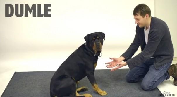 קסם לכלבים