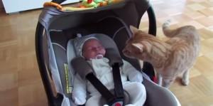 חתול פוגש תינוק