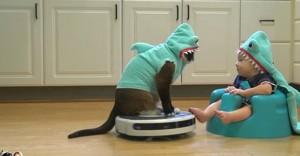 חתול כריש תינוק כריש