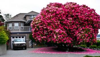 מהפנט: 20 העצים היפים והעתיקים בעולם (תמונות)