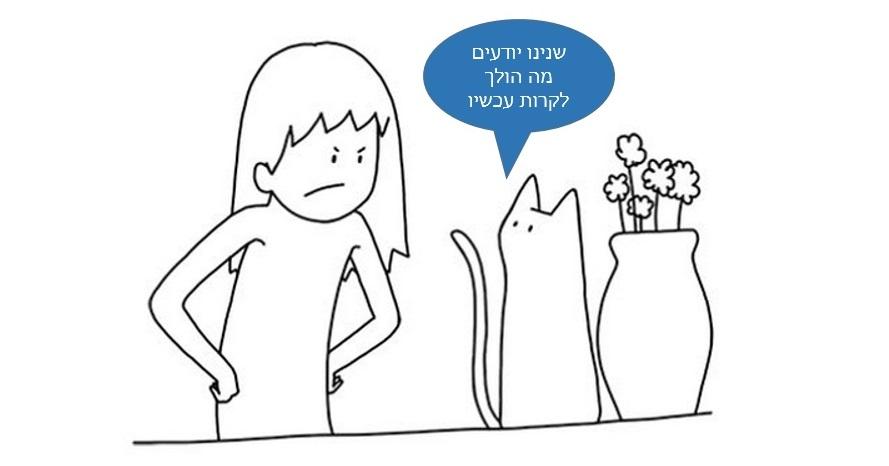 חתולים מדברי ם1