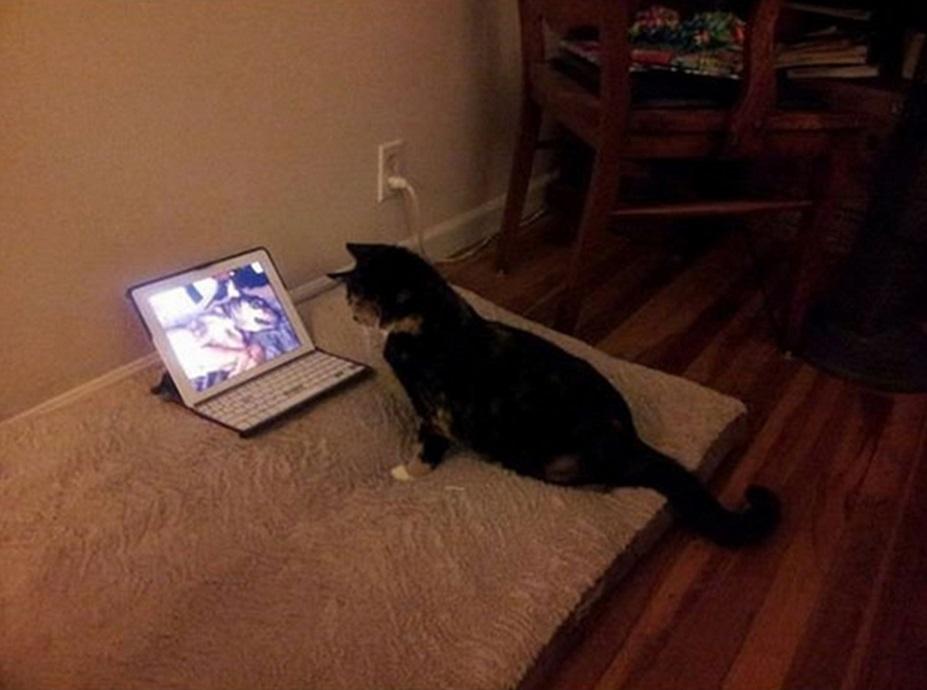 חתול וכלב 9