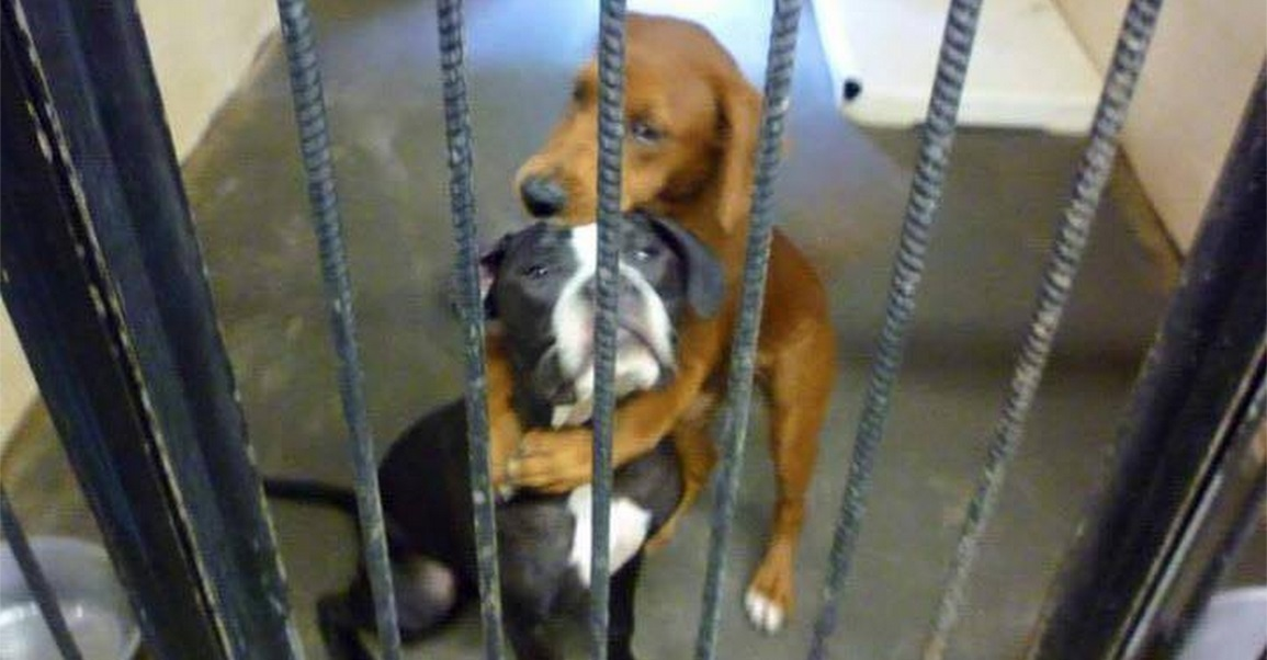 כלבים מחובקים ראשי