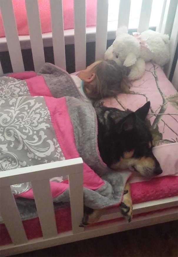 כלב ותינוקת ישנים יחד 1