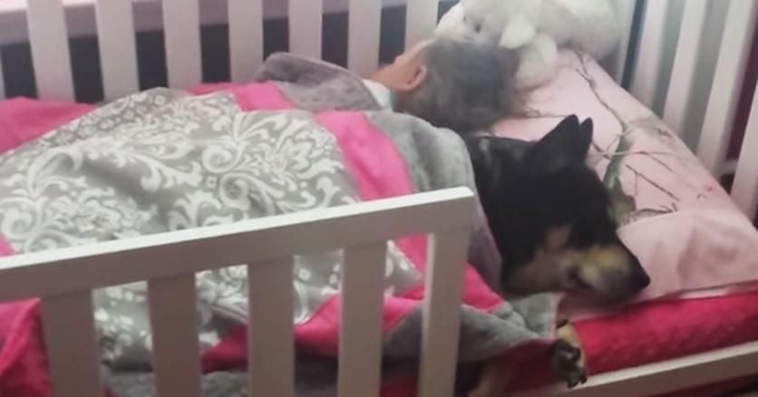 כלב ותינוקת ישנים 8