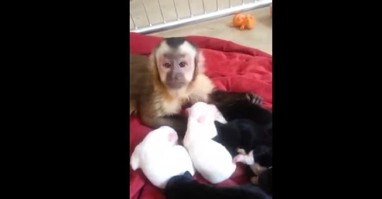 קוף פוגש גורי כלבים