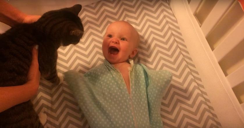 חתול פוגש תינוקת