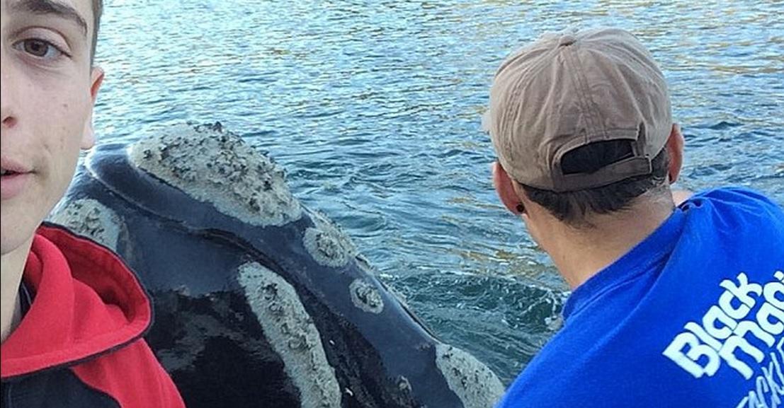 לווייתן מבקש עזרה