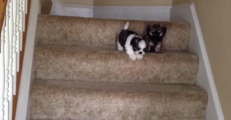 לרדת במדרגות בפעם הראשונה