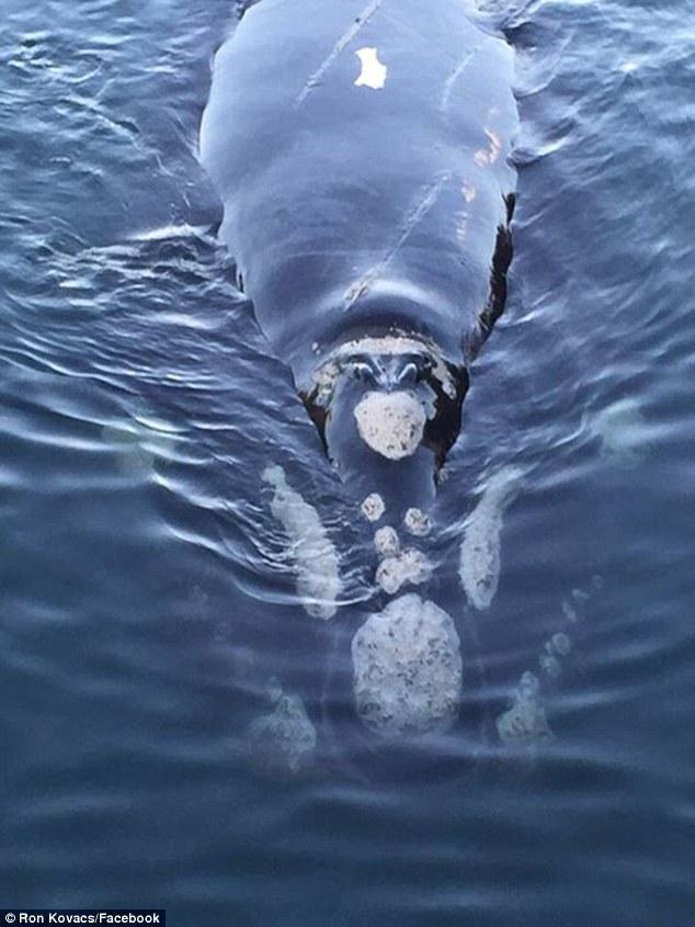 סלפי עם לווייתן 4