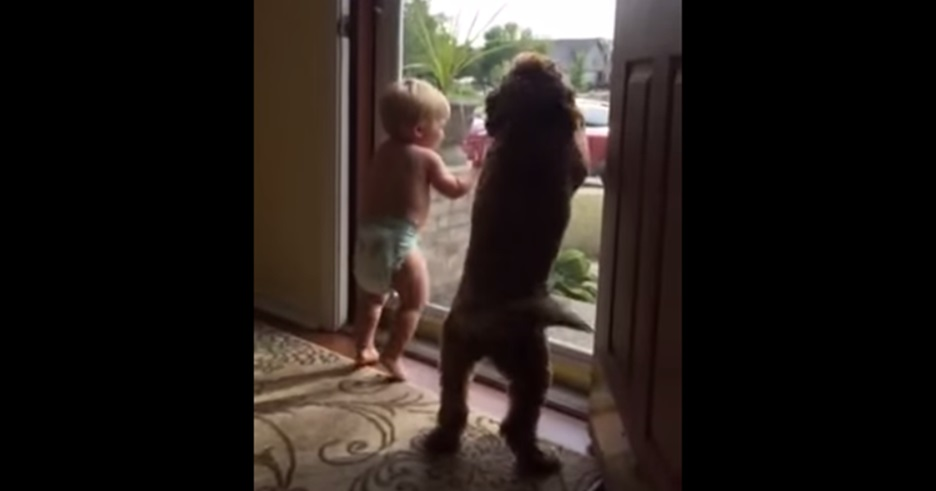 כלב וילד 2