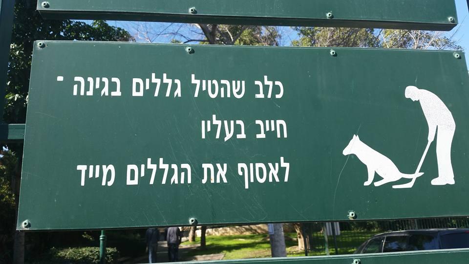כלב שהטיל גללים בגינה חייב בעליו לשחק גולף - Evyatar Ben Halevi-Arbib