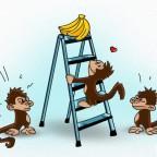 ניסוי קופים ראשי