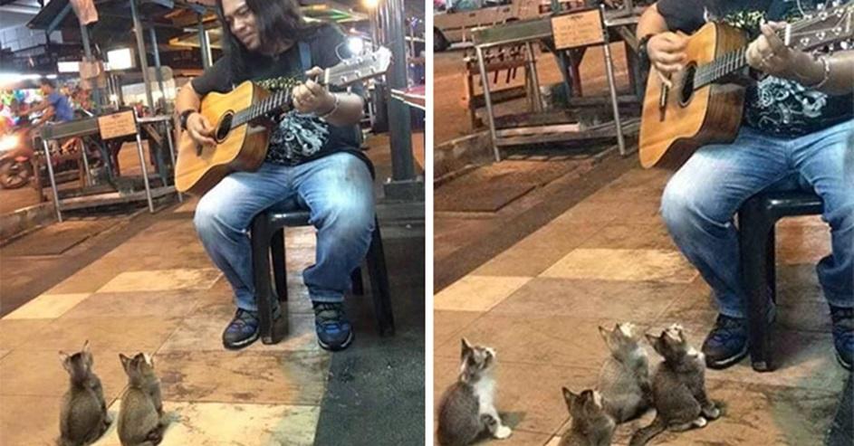 נגן רחוב וחתולים