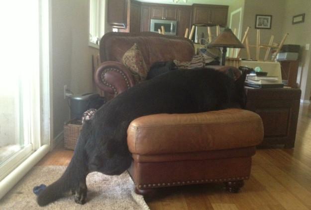 אני לא שוכב על הכורסא... הרגליים האחוריות שלי נמצאות על הרצפה