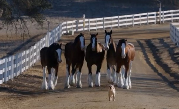 כלב וסוס 3