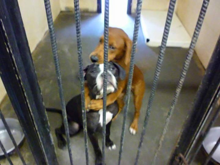כלבים מחובקים 2