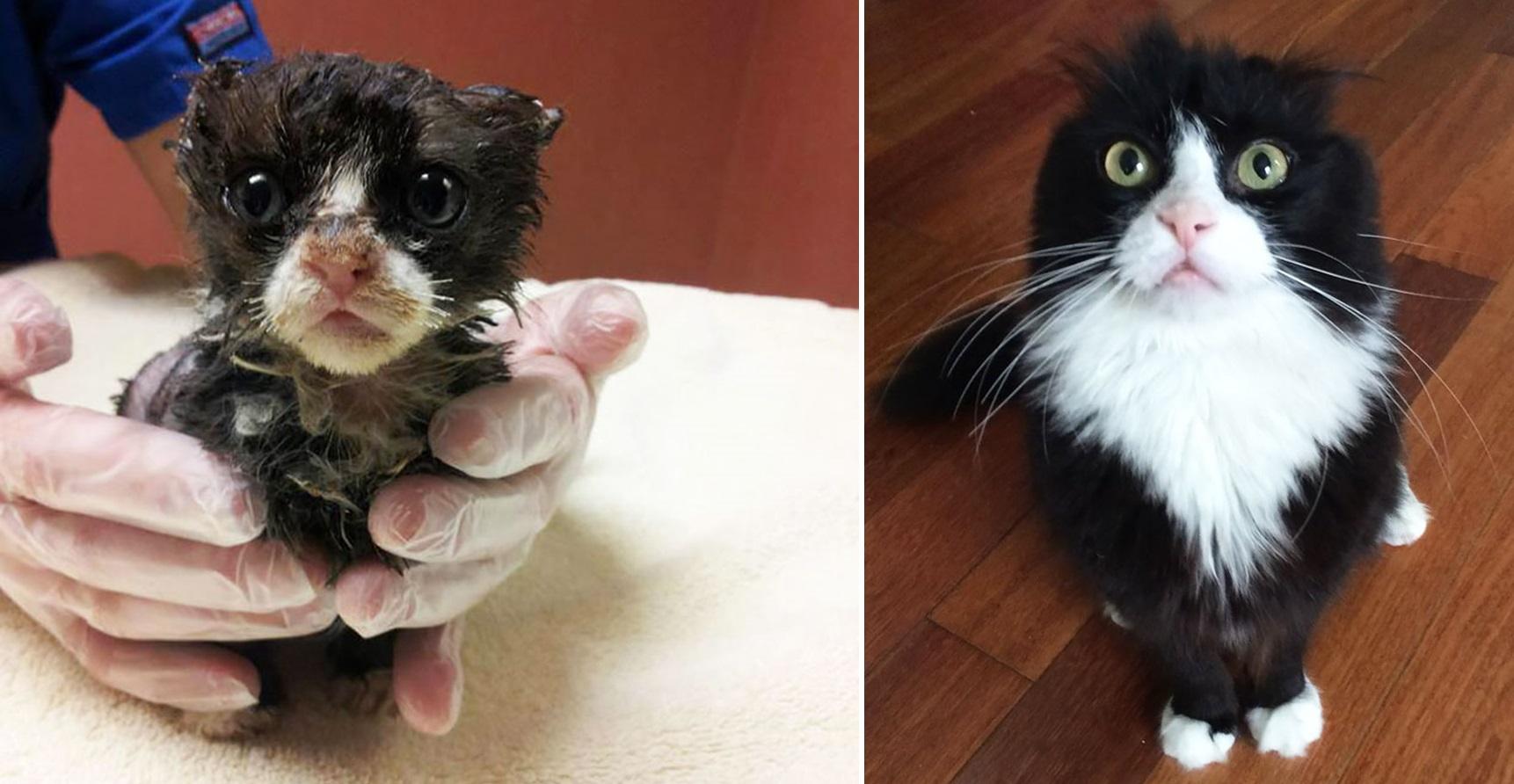 32 תמונות מרגשות של חתולים לפני ואחרי שאימצו אותם