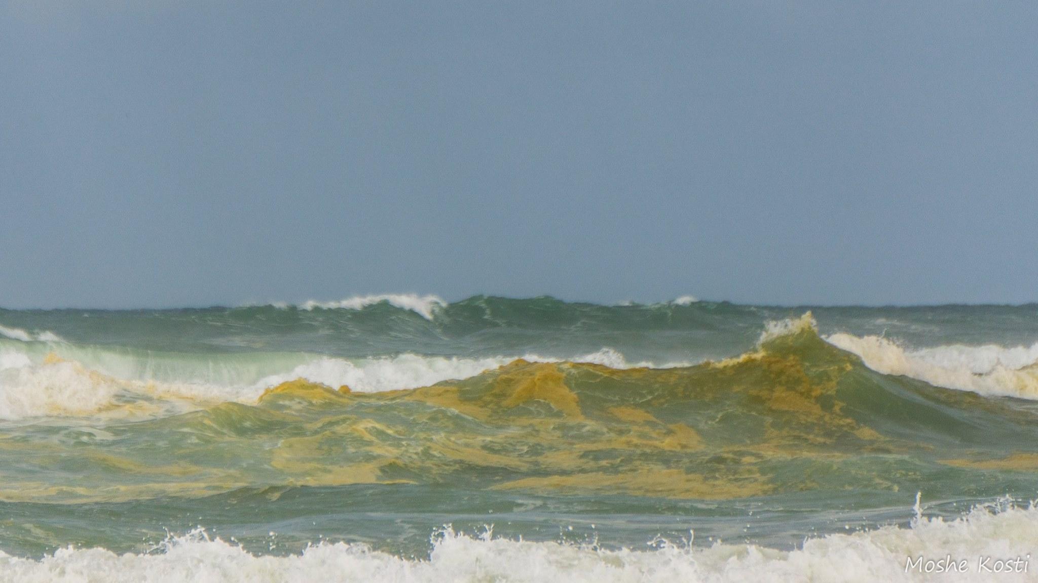 זיהום בחוף פלמחים 3