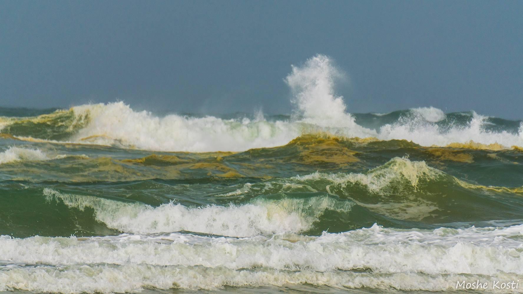 זיהום בחוף פלמחים 6