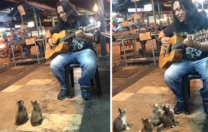 חתולים מקשיבים