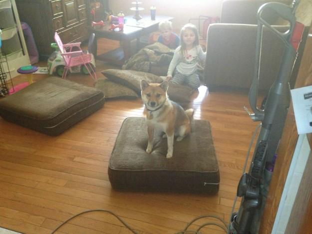 אני יודע שאסור לי לעלות על הספה אבל קרה מצב שהספה ירדה אל הרצפה ככה שאני לא עובר על שום חוק