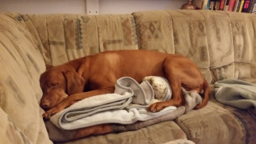 אסור לו להיות על הספה אבל מותר לו לשכב על השמיכה. אז זה מה שהוא עשה הממזר