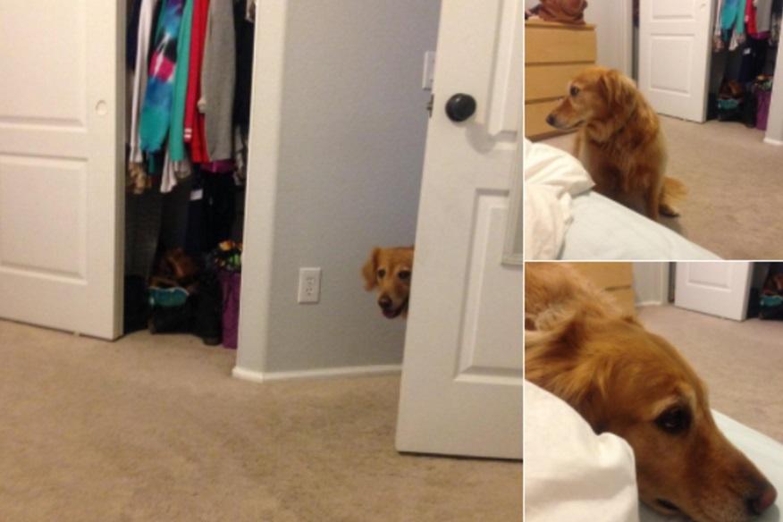 הכלבה שלי יודעת שאסור לה להיות בחדר והיא מנסה לא ליצור קשר עין כדי שאני אסלק אותה