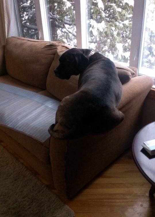 הכלל הוא שאסור לו לשבת על הכריות אז הוא לא יושב על הכריות