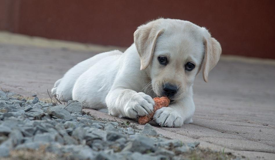 ירקות שאסור לתת לכלב